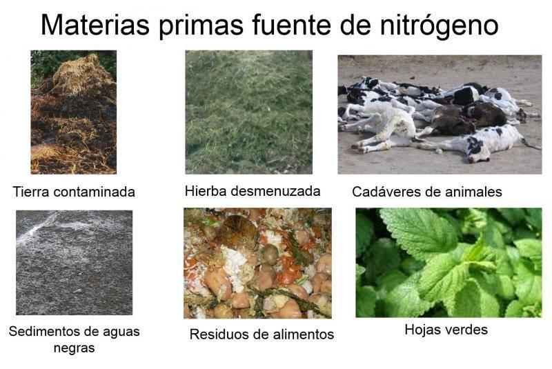 Materia primas fuente de nitrogeno